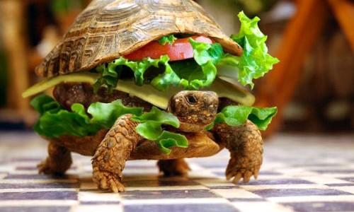turtle-hamburger